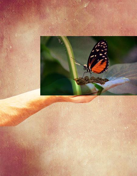 mariposa-multiplicar